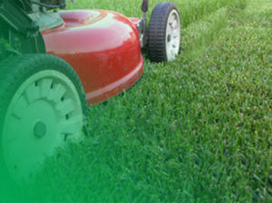 lawn mowing service completed by 1300 4 gardening