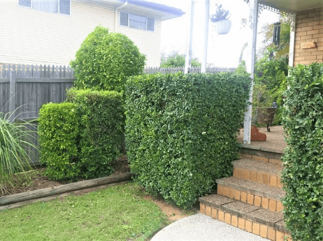 Hedging Services Completed by 1300 4 Gardening