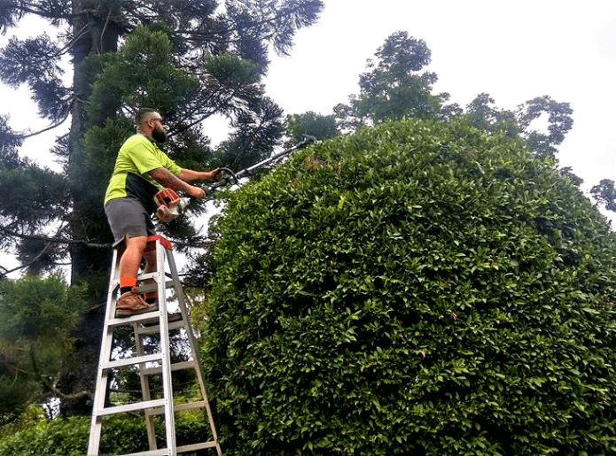 Extension Hedge trimming done by chris campbell