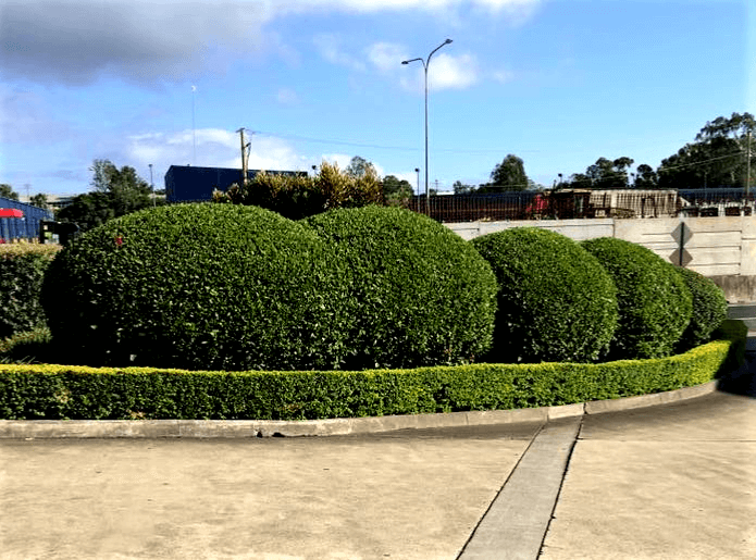 Various Hedges on commercial property