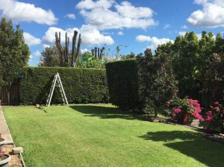 High-hedge-to-keep-this-landscape-yard-very-private_