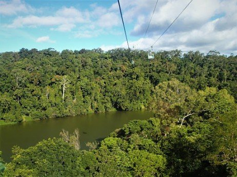 Kuranda-Skyrail-photo-taken-by-Shelley-Farmer-of-1300-4-Gardening-the-professional-landscape-gardeners