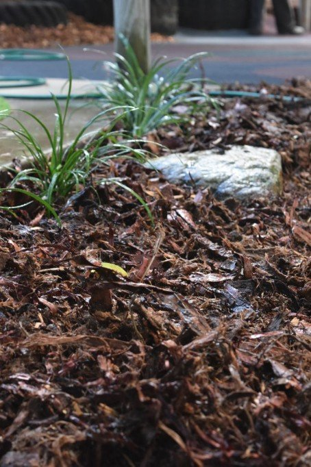 Mulch-spruced-up-this-little-garden-area